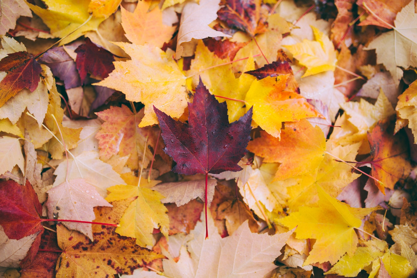 Tips for a Healthy Autumn